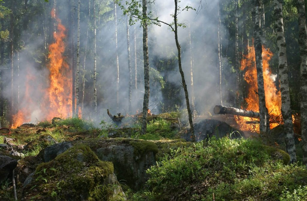 Spontaneous combustion is another cause of wildfire