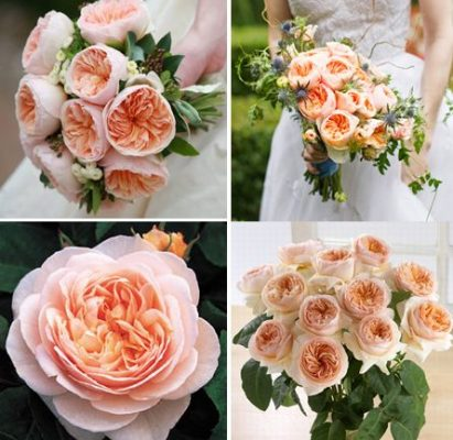 """The world's most expensive rose that you can gift to your loved ones is """"Juliet rose"""". This is a medium sized rose of glowing peach color."""